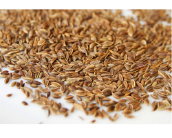 Dill Seeds, Pack Size: 10 Kg, Pack Type: PP Bag