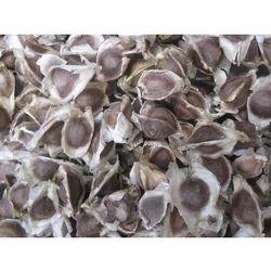 Black Mooringa Seeds