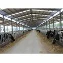 Cow Prefabricated Sheds