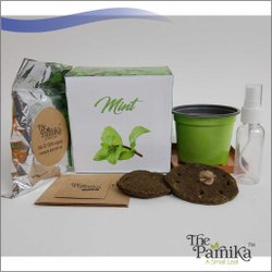THE PARNIKA Mint Plant