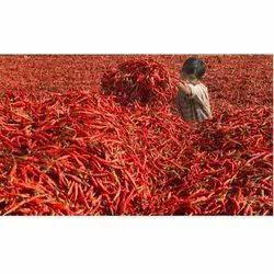 Salem Gundu Dry Red Chilli, With Stem, Dry Place