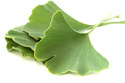 Ginkgo Leaves Extract