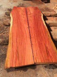 Eucalyptus Planks