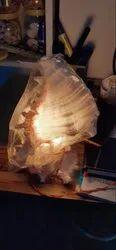 Sea Shell Craft 112