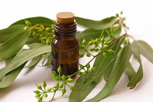 India Leaves Eucalyptus Oil (Eucalyptus Globulus), Packaging Type: 25 Kg,  Rs 1450 /kg | ID: 22521160962