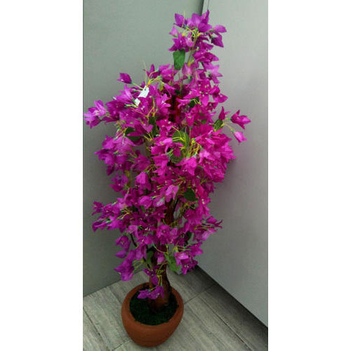 Purple Hibiscus Flower Plant At Rs 2450 Piece Ernakulam Id