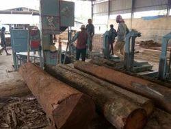 Oak Wood Log, Thickness: 4 - 8 Inch