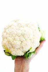 Sejenta cauliflower, Packaging: Plastic Bag Or Polythene Bag