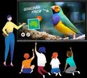 Multi Touch Interactive Flat Display