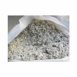Organic Cotton Seed