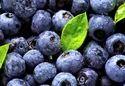Blueberry Pterostilbene Anti-cancer Antioxidant