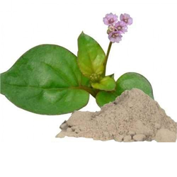 Punarnava Whole Plant Powder