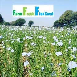ABC Golden Flax Seeds Elite for sowing, For Sowing/cultivation, Pack Size: Sample