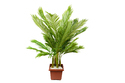 Artificial Green Palm Tree
