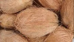 A Grade Matured Semi Husked Coconut, Packaging Size: 25, Coconut Size: Large