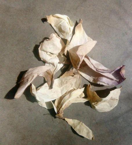 Pink Dry Lotus Petals Pack Size 15 Kgs Rs 550 Kilogram Herbal