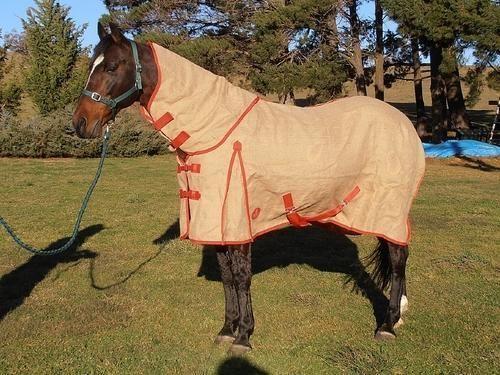 Znalezione obrazy dla zapytania Hessian horse
