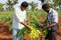 Electronic Solution Against Agriculture Pests