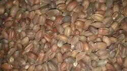 Jojoba Seed, Packaging Type: Bag
