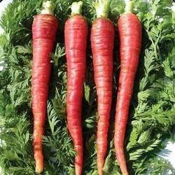 Fresh Carrot, Pesticide Free (for Raw Products), Packaging: Carton