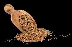 Rajka Seeds Teen Sali
