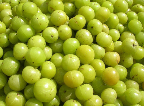 Organic Gooseberry Amla, Pesticide Free (for Raw Products), Rs 40 /piece |  ID: 17971659588