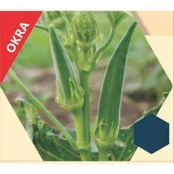 Queen-11 F1 Hybrid Bhindi Seeds