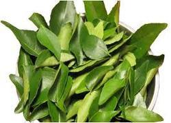 Curry Leaves (Meetha Neem) Extract