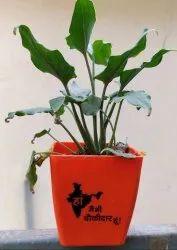 Blossom 5 Main Bhi Chaukidaar Pot