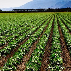 Cheap Agricultural Land for Sale in Hyderabad, Deals