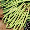 French Bean Seed -varun