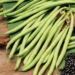 French Bean Seed -Varun