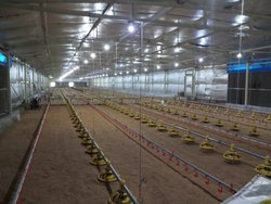Climate Control Poultry Shed
