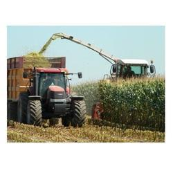 Green Maize Silage