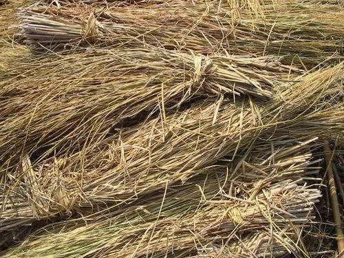 Paddy Straw/Grass