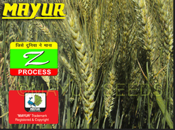Mayur Wheat Seeds
