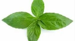 Basil Essential Oil (Sweet)