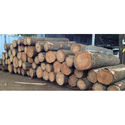 Silver Oak Wood Logs