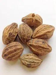 Harad / Haritiki / Terminalia Chebula / Chebulic Myrobalan Ayurvedic Tree Seeds