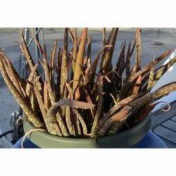 Dry Aloe Vera Leaf, Packaging Size: 25 Kg, Packaging Type: Bag