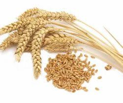 Aromablendz Wheat Germ Oil