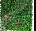 Nylon Artificial Vertical Wall