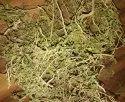 Orithal Thamarai (Hybanthus enneaspermus)