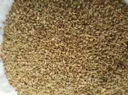 Fresh Ajwain Seed