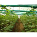 Natural Ventilated Green House
