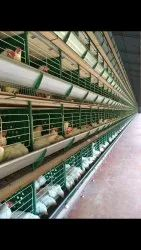 zucami battery cage system