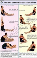 Paschimottanasan & Ardh Matsyendrasan For Yoga Chart