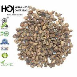 Argyreia Nervosa Seeds Hawaiian Baby Woodrose Seeds Vidhara Seeds Hawaiian Baby Woodrose Seeds À¤†à¤° À¤— À¤° À¤¯ À¤¨à¤° À¤µ À¤¸ À¤¸ À¤¡ Mahadev Enterprises Delhi Id 22036369073