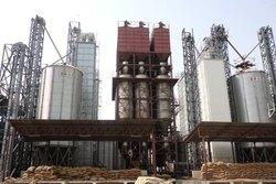 Complete Consultancy for Rice Plants