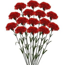 Carnation Flower In Hyderabad Latest Price Mandi Rates From Dealers In Hyderabad